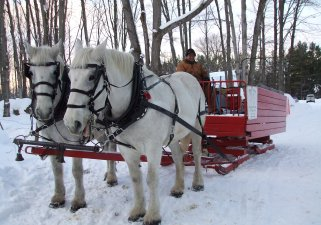 Dual Acres Horse Drawn Sleigh & Wagon Rides