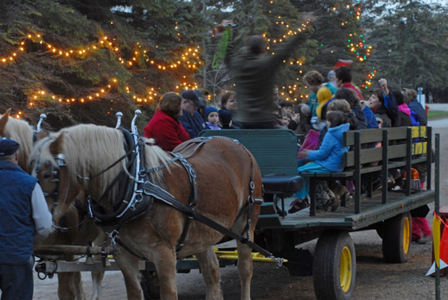 Local Christmas Lights